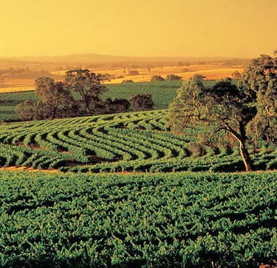 Barossa Valley, Sth Australia [Wine Country]