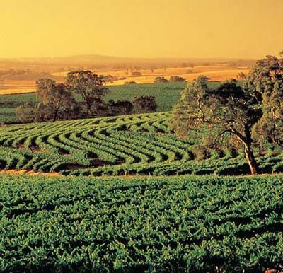 Barossa Valley, Sth Australia [Wine Country]