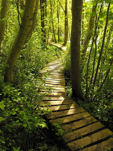 17 Best Images About Wooden Paths On Pinterest