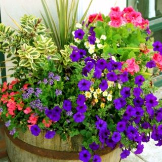 town planter ideas whiskey barrels - Bing Images