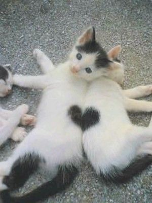 <3: You Complete Me, Soul Mates, So Cute, True Love, Cat Love, Love Is, Valentines Day, Love Heart, So Sweet