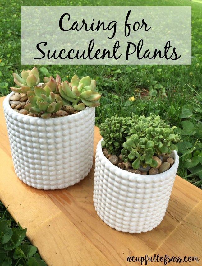 How To Care For Succulent Plants Plants Gardens And