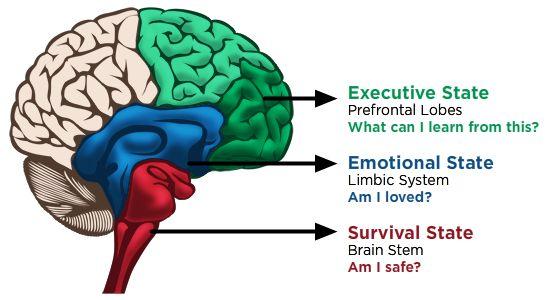 Conscious Discipline Brain State Model