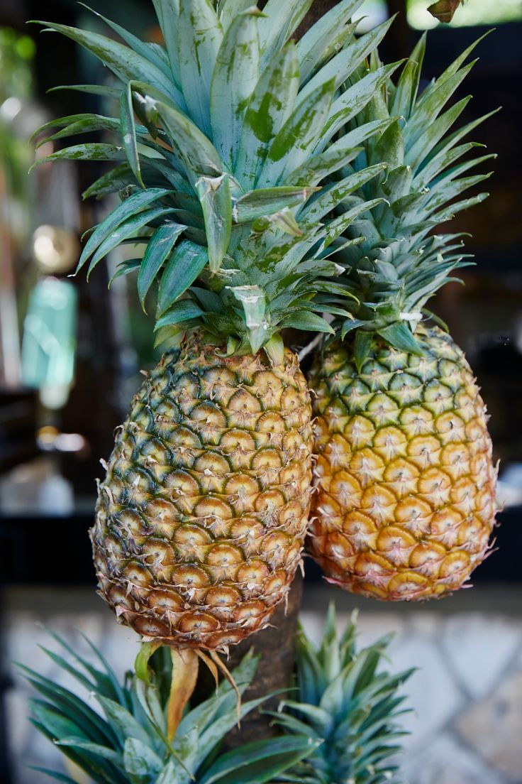 Deser williams pictures to pin on pinterest - How To Pick A Pineapple Williams Sonoma Taste
