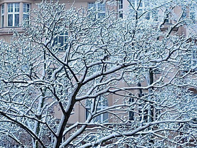 … wachsen hier auf dem Balkon. Pfeifenwinde, Glockenblume, Rosmarin und Stiefmütterchen. Efeu ist auch wieder vertreten.