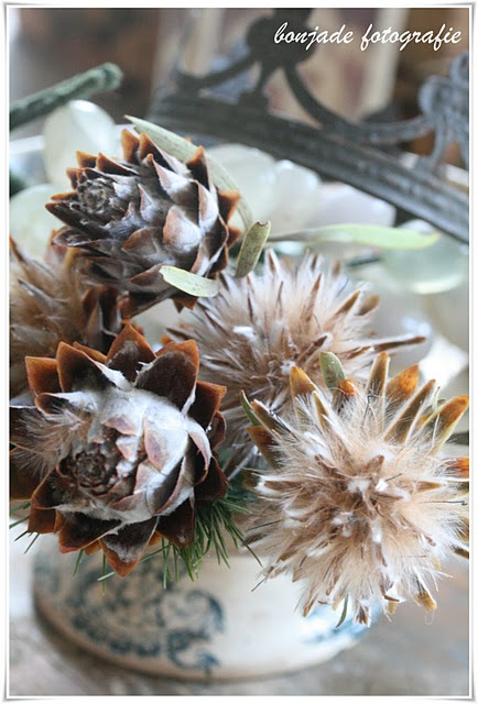 Dried flowers and pods...