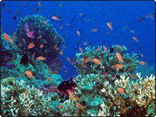 Great Astrolabe Reef, Kadavu Fiji