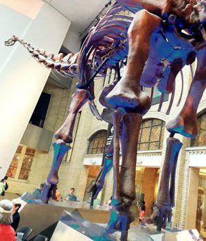 Dinosaur at the ROM