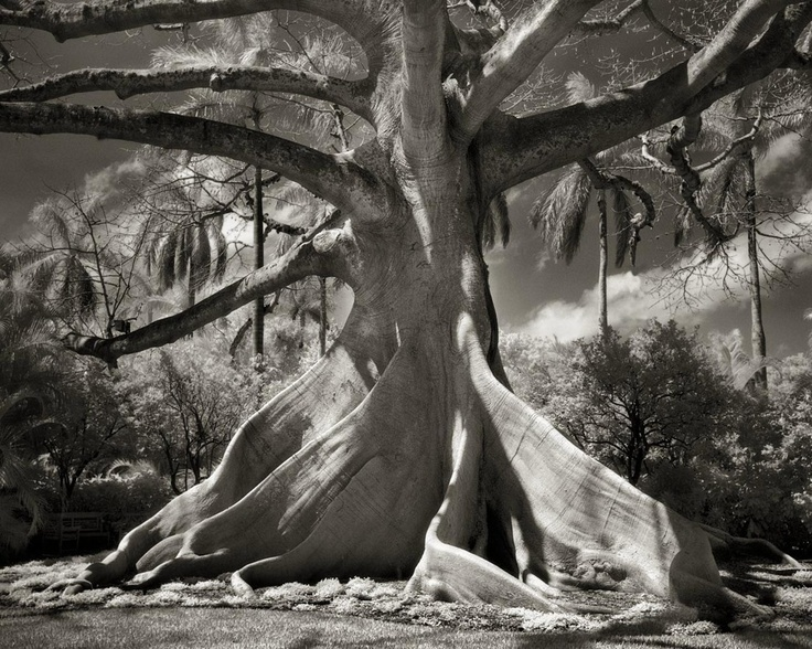 Beth Moon - Portraits of Time