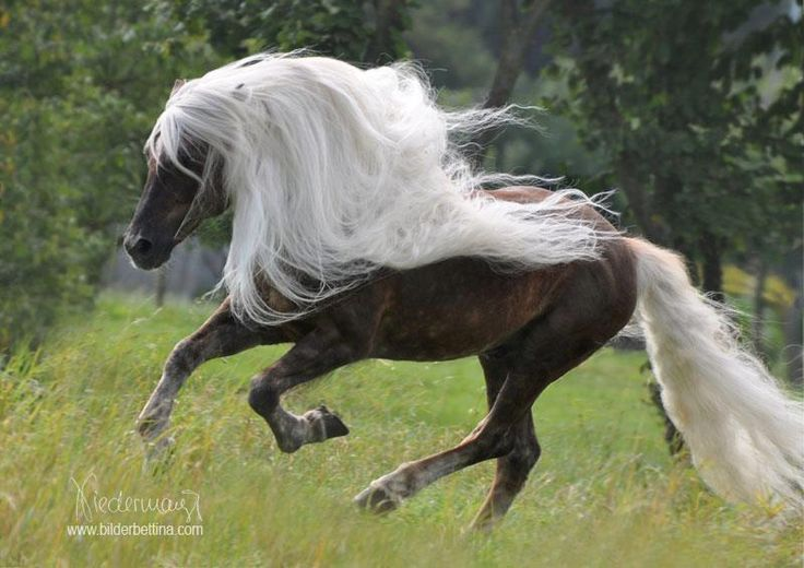 Awesome mane and tail...what a beauty !