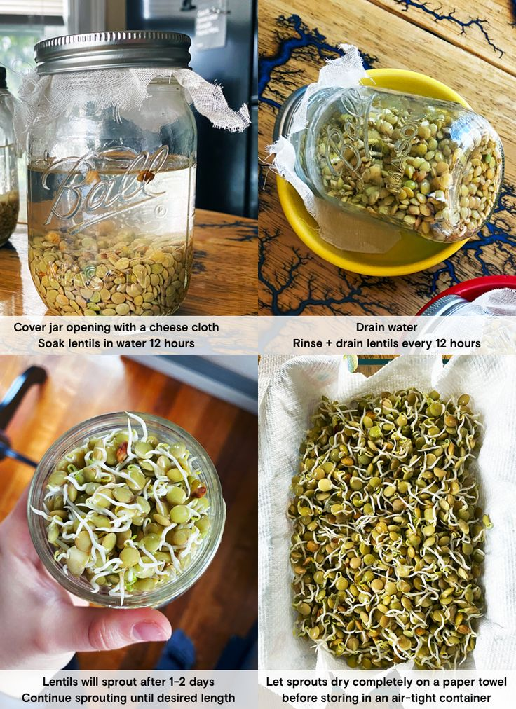 How to Sprout Lentils in a Jar Daughter of Seitan
