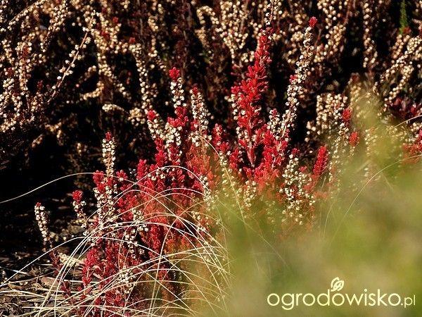Kiedyś będzie tu ogród - strona 195 - Forum ogrodnicze - Ogrodowisko