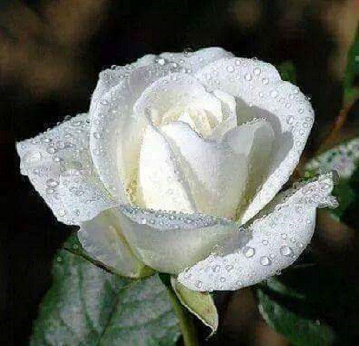 44 besten AA Birthday Flowers Bilder auf Pinterest | Schöne blumen ...