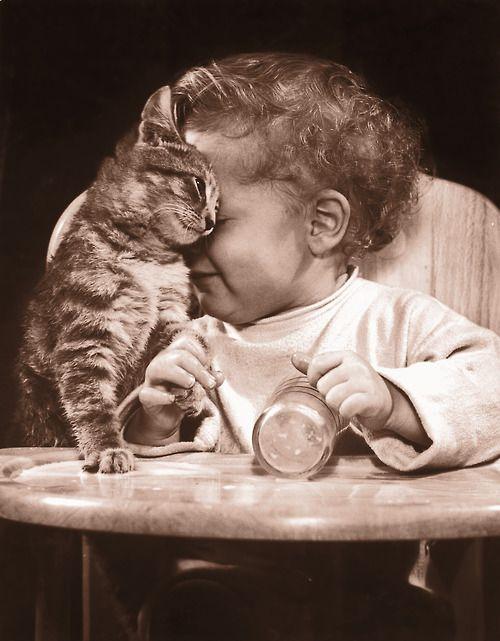 Kitty head bumps mean I love you. ^~^