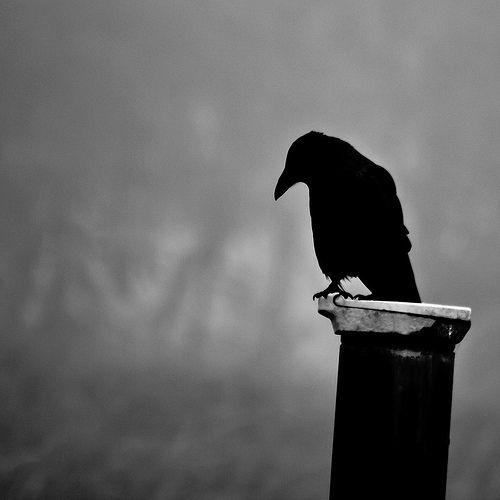 sometimes even crows start to wonder what it's all about... (revamped) | par thomas lieser (thomas-lieser.smugmug.com)