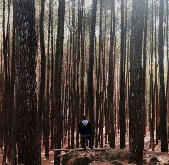 Imogiri pine Forest - Yogyakarta