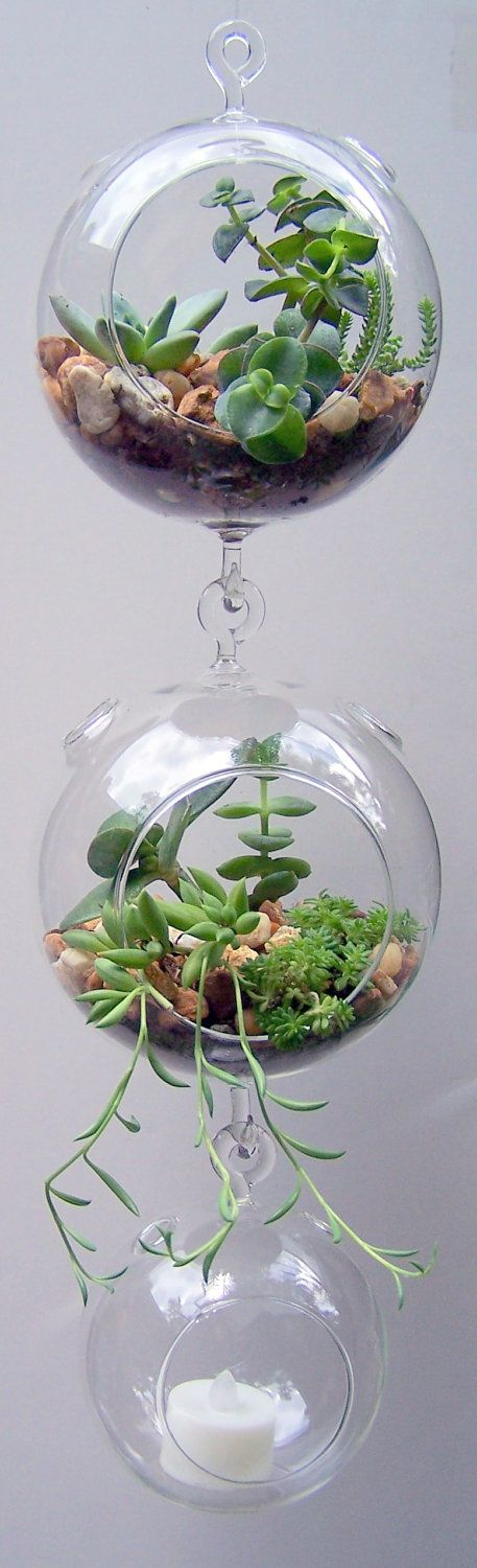 Terrarium Glass Hanging Double Hook with Succulents Dorm Room Accessory DIY.