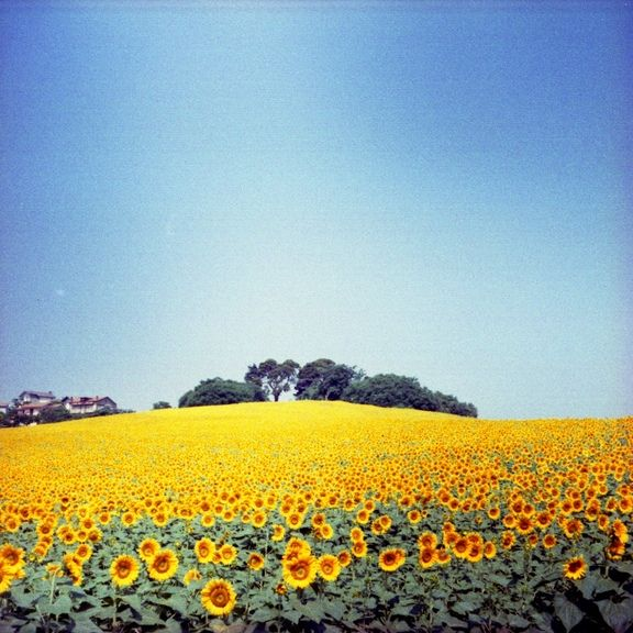 The hill of the sun by superlighter on lomography photo viewer