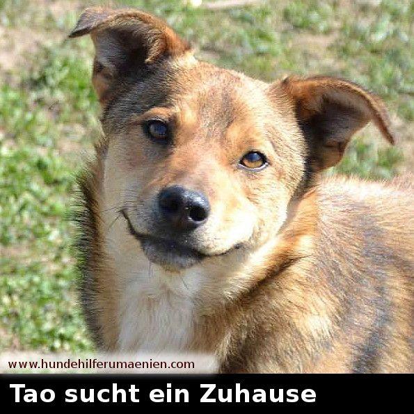 <3 Tao sucht ein Zuhause <3 www.hundehilferumaenien.com/tierhilfe-hunde-rettung-tao/ Tao und seine Schwester Xiang wurden alleine auf einem Feld entdeckt als sie gerade erst 5-6 Wochen alt waren. Wir gehen davon aus, dass sie ausgesetzt wurden, da weit und breit keine Mama zu finden war. Ein netter Mann hat sie gefunden und aufgenommen. Leider ist sein Gelände nicht groß genug für zwei Hunde, deshalb hat er uns um Hilfe gebeten. Natürlich haben wir die Beiden aufgenommen und sie wachsen nun…