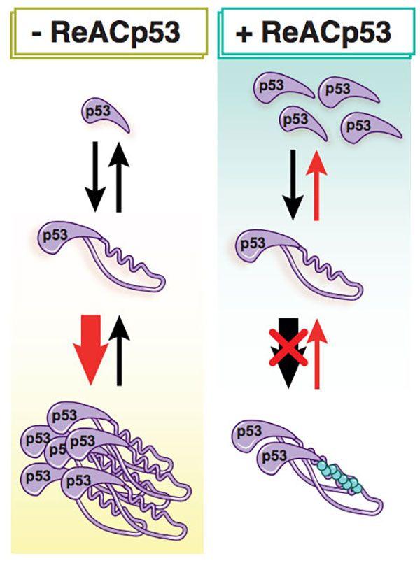 Novel Treatment Shrinks Ovarian Tumors in Mice - National Cancer Institute