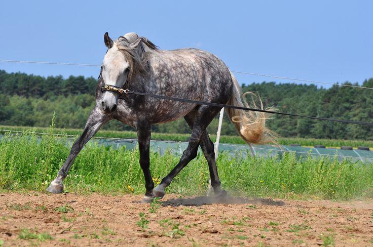 Longenkurse von Babette Teschen. Als Pferdetrainerin hat sich Babette Teschen auf die gesundheitsfördernde Bodenarbeit und das Longieren spezialisiert. Alle Infos und Kurstermine auf www.PferdeTermine.de