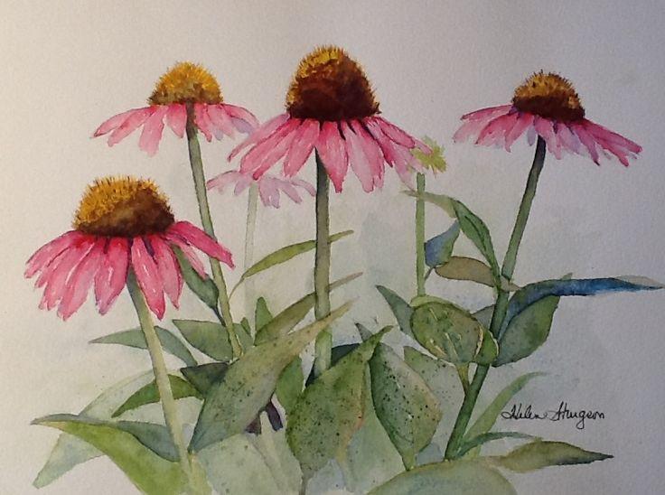 Coneflowers in watercolor  Helensturgeon.blogspot.com