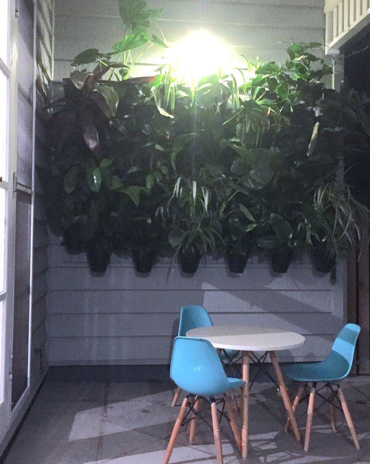 Atmosphy Green Wall www.atmosphy.com.au #greenwall #indoorants #green walls #interiordesign