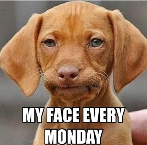 Good Morning Meme Dog : Monday morning meme puppies dogs funny picture