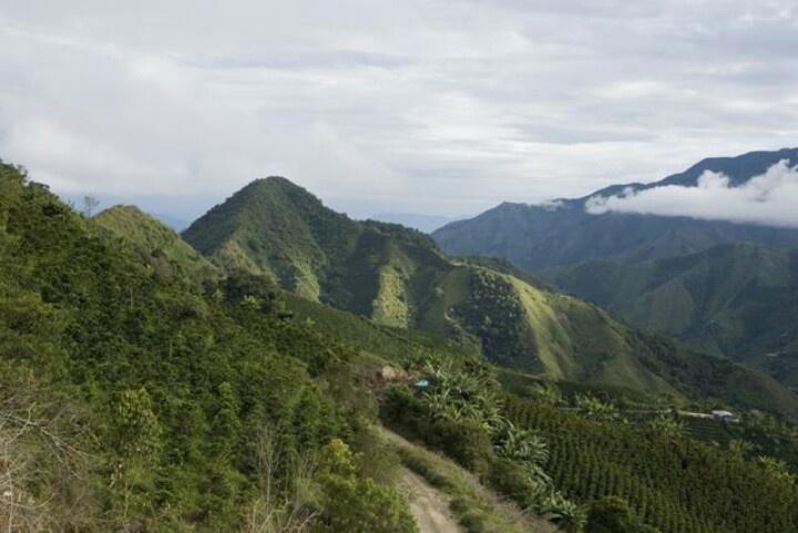 Montañas de Colombia,  eje cafetero, mejor cafe del mundo.