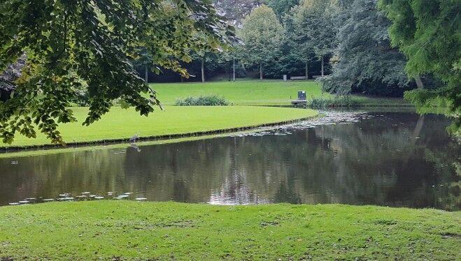 Vijver, Rotterdam
