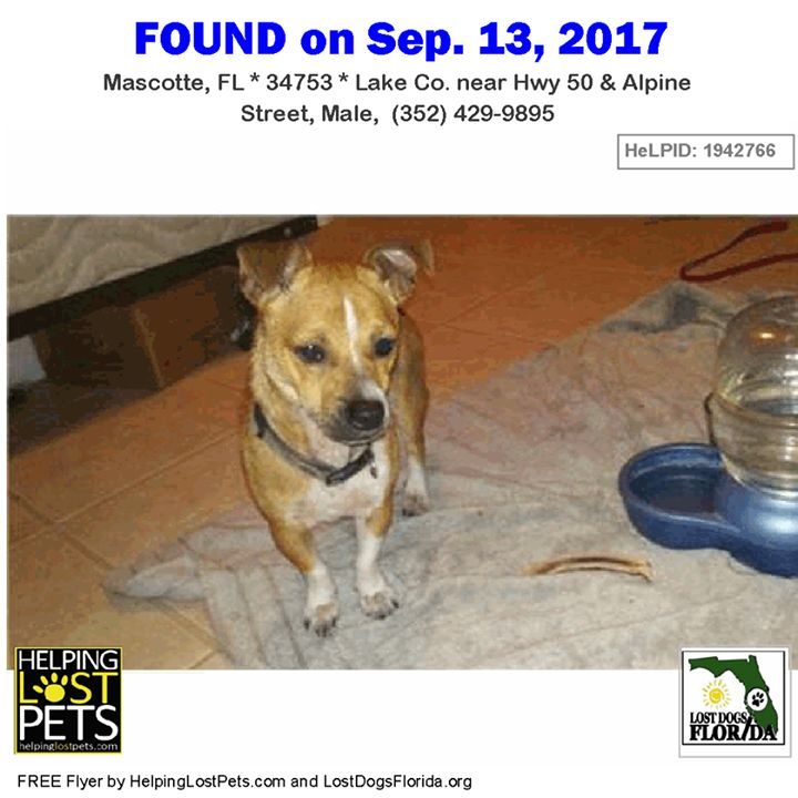 Spread the word to find my owner! This male #Corgi #Chihuahua #mix was found near Hwy 50 & Alpine Street in #Mascotte.  Contact: (352) 429-9895 #Dog Corgi Chihuahua.    More info photos dog's location on the HeLP map or to message finder:  http://ift.tt/2xwqkKv