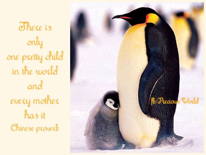 There is only one pretty child in the world  and every mother has it. ~ Chinese proverb - Penguin