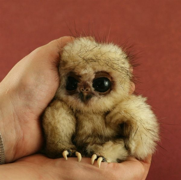 Dont get excited~its not a sloth! Awww a baby Owl
