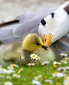 such tender love between Mother and baby <3