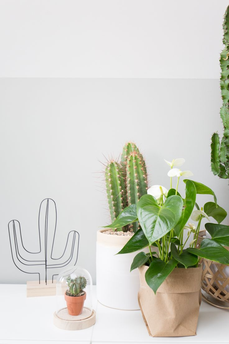 Portfolio Mignon van de Bunt  #interieurplan #interieurdesign #interieurstyling #interieurontwerp #styling #greenish #natural #cacti #cactus #nature #interieur #green #lambrisering #paintedlambrisering #moodboard