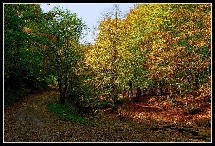Selva de Irati - Autumn