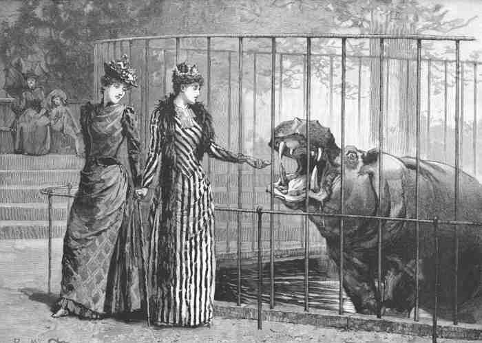 history of zoos A rich history since 1900 (or 1901, depending on who you ask) lafayette park began its acquisition of animals in 1900, but did not officially become the lafayette zoological park until 1901.