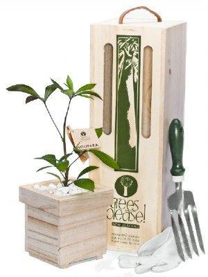 Native Tree Gifts Houpara Tree Gift Box