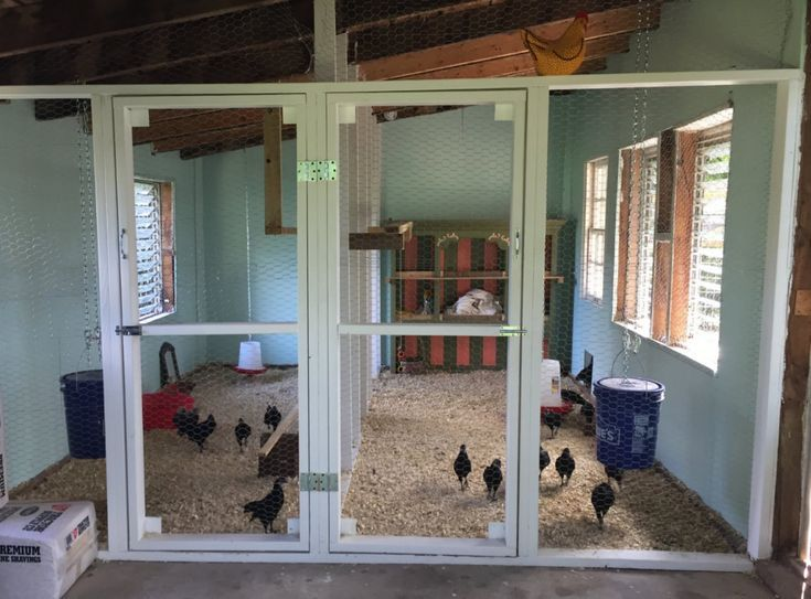 9 Awesome Shed to Chicken Coop Conversions