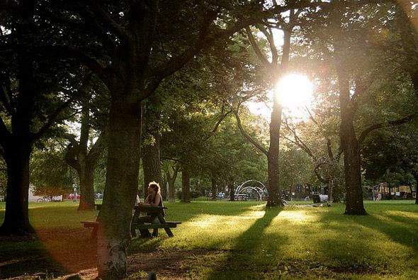 Trinity Bellwoods Park - one of the hippest and most cultured of Toronto's public spaces, playing host to many art shows and cultural events.