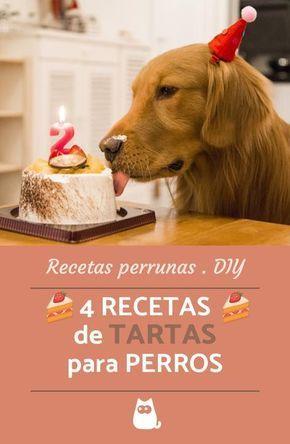 RECETAS de TARTAS para tu perrito  #DIY #fiestaperruna