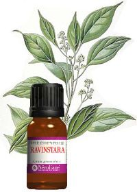 Utilisation huiles essentielles - Huile essentielle de Ravintsara