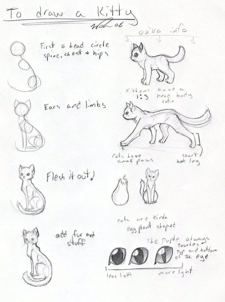 Cat tutorial -OLD- by ~FrostDragonVacu on deviantART