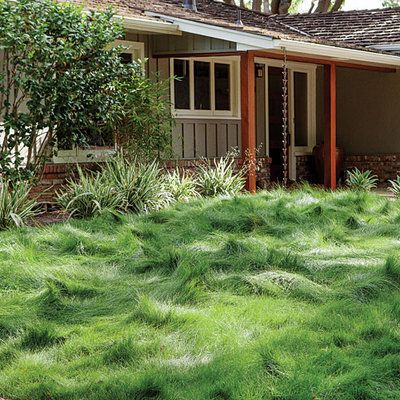 Doppelgänger to a wind-tossed sea: Eco-Lawn, a blend of a half-dozen fescues that grows well in sun and shade, and never gets much above ankle height.