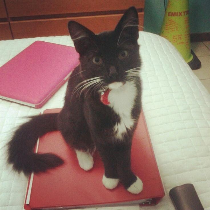 Fuck study Im a cat ♡