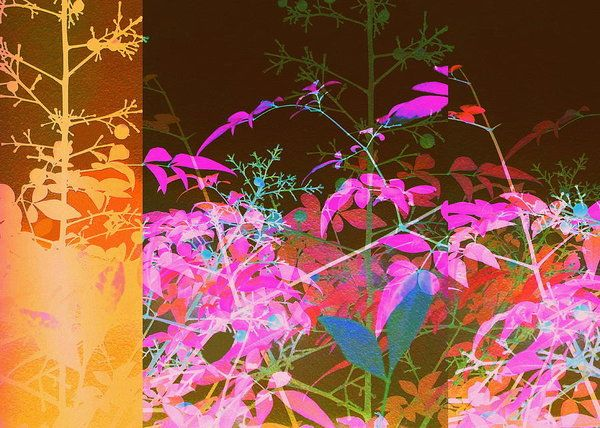 DP84 Kaleidoscope Silhouette of foliage Digital art by Rheta-Mari Kotze