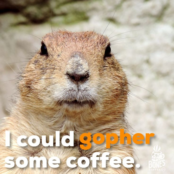 Raise your hand if you could #gopher some coffee!