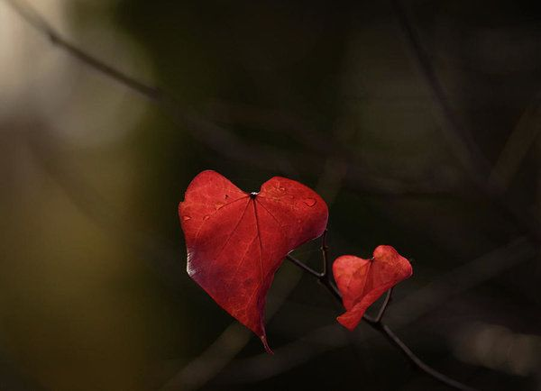 Art prints for sale.  A symbol of love, romance, longing, perhaps regret...  what do hearts symbolize for you?