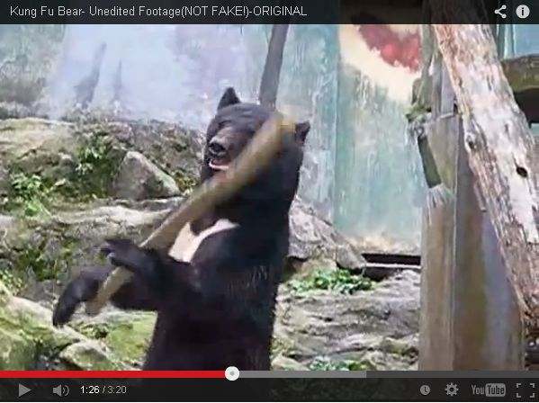 Εξωραιστικος Συλλογος Οικισμου Οτε Δηλεσιου : ΑΠΙΣΤΕΥΤΟ: -Αρκούδα κάνει Κung Fu και ξετρελαίνει ...
