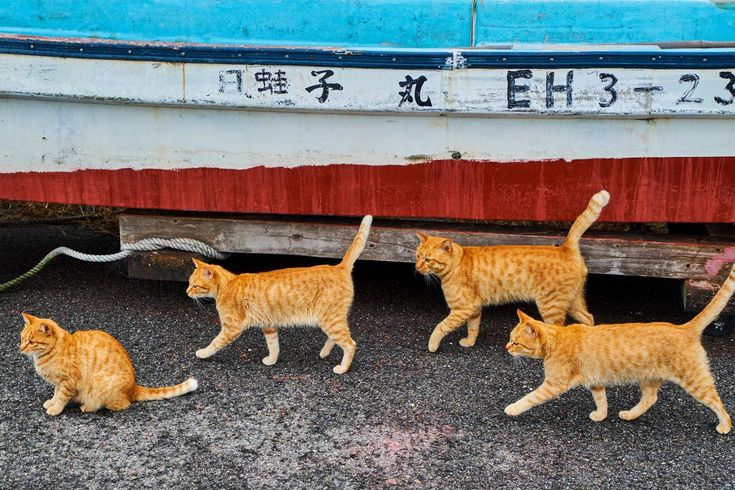See the lives of street cats around the world Orange